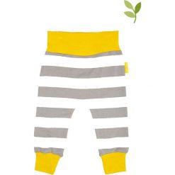 Spodnie w kolorze szaro-białym. Spodenki niemowlęce marki Toby Tiger. W wyprzedaży za 49.95 zł.